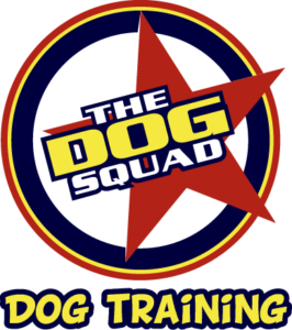 Our Oakland dog trainer will get your dog trained in no time!